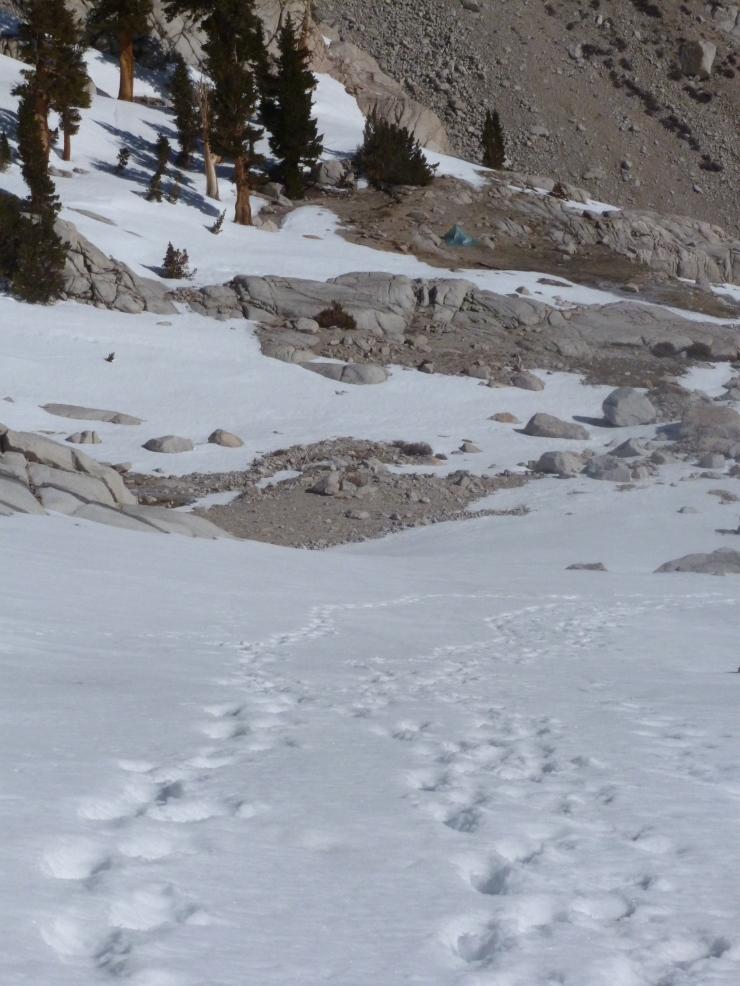 tracks to camp